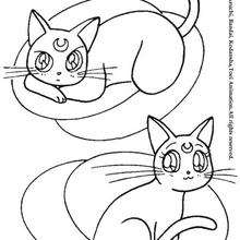 Katzen: Artemis und Diana