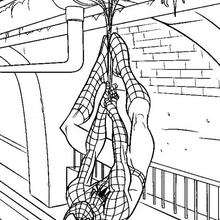 Spidermans Netze