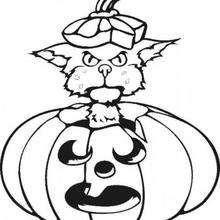 Katze spielt mit einem Halloween Kürbis