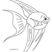Fisch zum Ausmalen