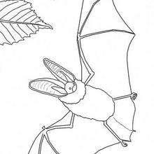 Fledermaus und Schmetterling zum Ausmalen