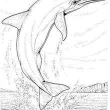 Großer Delphin zum Ausmalen