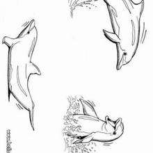 Spielende Delphine zum Ausmalen