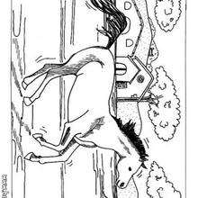 Gallopierendes Pferd zum Ausmalen