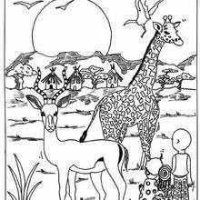 Giraffe und Antilope zum Ausmalen