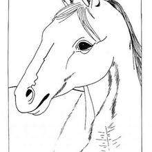 Pferdekopf zum Ausmalen