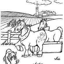 Pferde zum Ausmalen