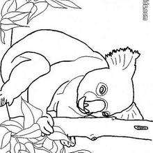 Koala Zum Ausmalen Zum Ausmalen De Hellokids Com