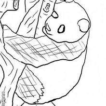 Panda zum Ausmalen