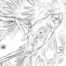 Papagei zum Ausmalen