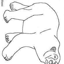 Eisbär zum Ausmalen