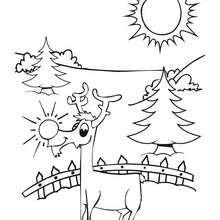Rudolph das Rentier zum Ausmalen
