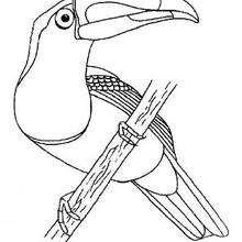 Tukan zum Ausmalen