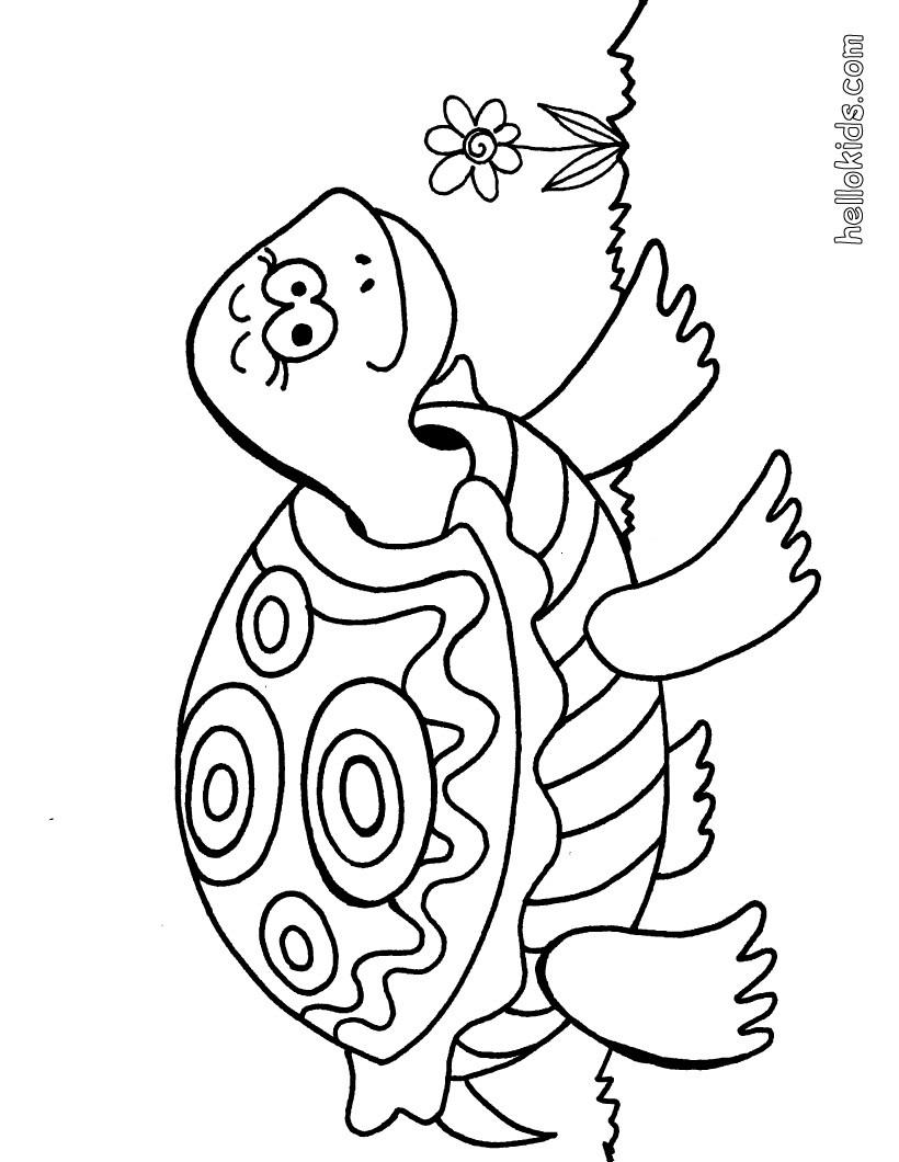 38 schildkröten bilder zum ausmalen  besten bilder von