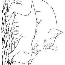 Zwei Schweine zum Ausmalen