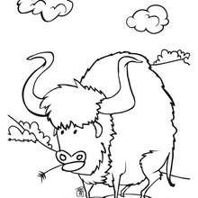 Büffel zum Ausmalen