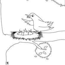 Vogelnest zum Ausmalen