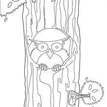 Eule sitzt auf einem Baum zum Ausmalen