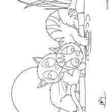 Spielende Kätzchen zum Ausmalen