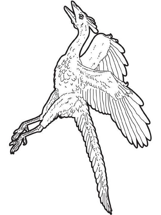 archaeopteryx zum ausmalen zum ausmalen  dehellokids