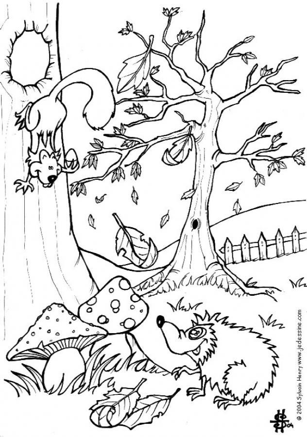 Eichhörnchen Und Igel Zum Ausmalen Zum Ausmalen De Hellokids Com