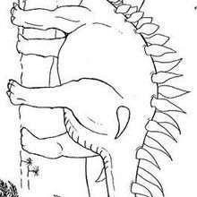 Stegosaurus und Palmen zum Ausmalen