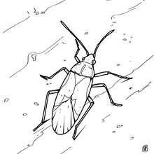 Kakerlake zum Ausmalen
