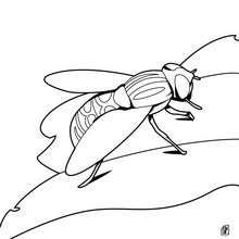 Fliege zum Ausmalen
