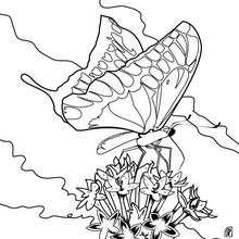 Bunter Schmetterling zum Ausmalen