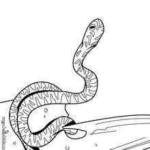 Verwirrte Schlange zum Ausmalen