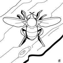 Biene zum Ausmalen