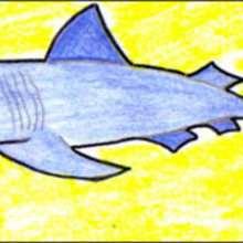 Wie man einen Hai malt