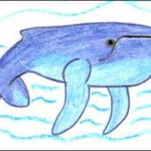 Wie man einen Buckelwal malt