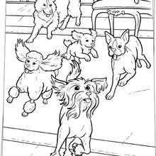 Laufende Hunde zum Ausmalen