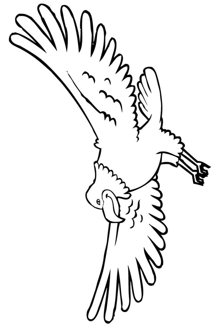 Weißkopfseeadler zum ausmalen zum ausmalen - de.hellokids.com