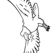 Weißkopfseeadler zum Ausmalen