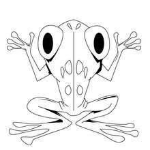 Großer Frosch zum Ausmalen