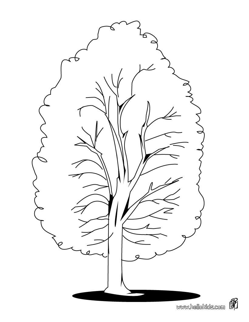 Bäume Zum Ausmalen Ausmalbilder Ausmalbilder Ausdrucken De