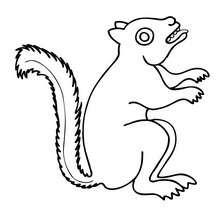Eichhörnchen zum Ausmalen