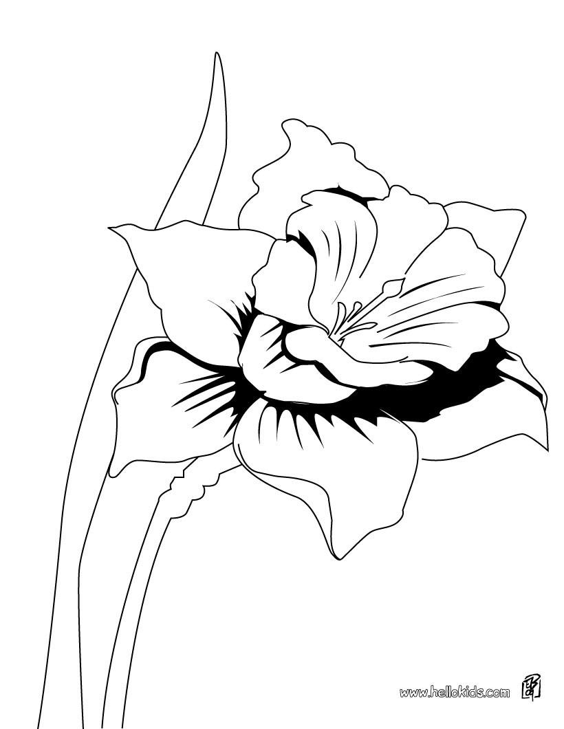 Ausmalbilder Zum Ausdrucken Blumen : Blumen Zum Ausmalen Ausmalbilder Ausmalbilder Ausdrucken De
