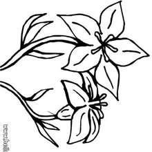 Lilie zum Ausmalen
