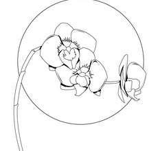 Orchidee zum Ausmalen