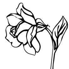 Rose zum Ausmalen