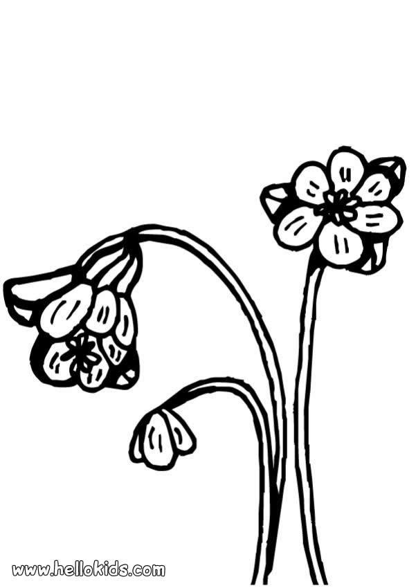 Blumenvase Zum Ausmalen Zum Ausmalen De Hellokids Com