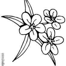 Drei Blumen zum Ausmalen