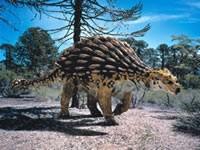 Wie man einen Ankylosaurus malt