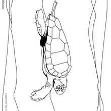 Unechte Karettschildkröte zum Ausmalen