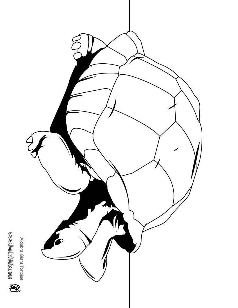 Süße schildkröte zum ausmalen zum ausmalen - de.hellokids.com