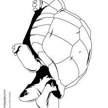 Aldabra Riesenschildkröte zum Ausmalen