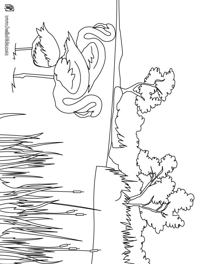 camargue flamingos zum ausmalen zum ausmalen. Black Bedroom Furniture Sets. Home Design Ideas